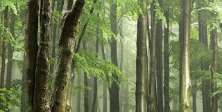 Manfaat udara Segar Bagi Tubuh Kita