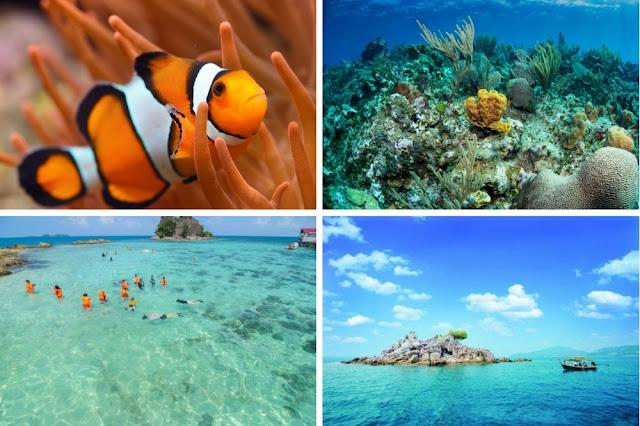 الشعاب المرجانية جزيرة بيتونغ