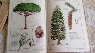 inwentarz drzew w srodku