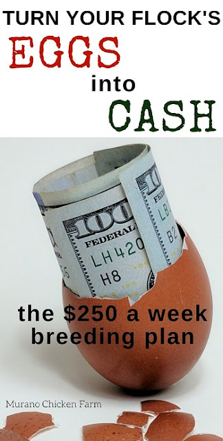 Make money from your chickens with my breeding method.