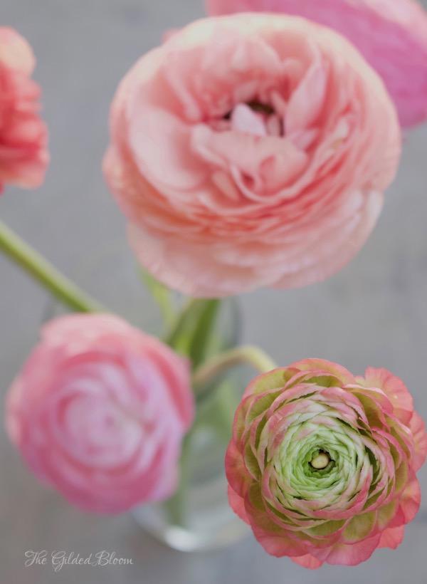 Flower Spotlight:  Ranunculus - www.gildedbloom.com