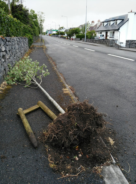 poor fallen tree on the side of the road