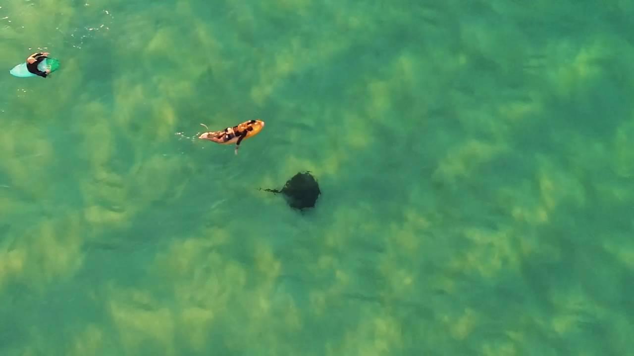 Dancing with stingray - Drone Sydney Bondi Beach