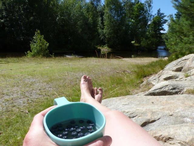 Vildmarkscamping Hätteboda Schweden Smaland Reise Urlaub Camping mit Hund Blaubeeren