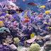 Calcium supplement Reactors within a Saltwater Aquarium tank