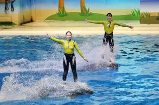 Marine Mammals Show