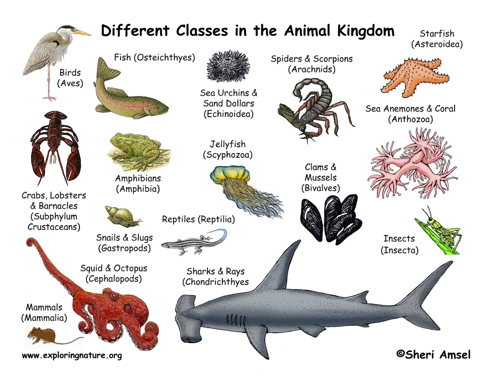 Animal Classes