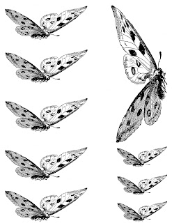 butterfly illustration collage digital