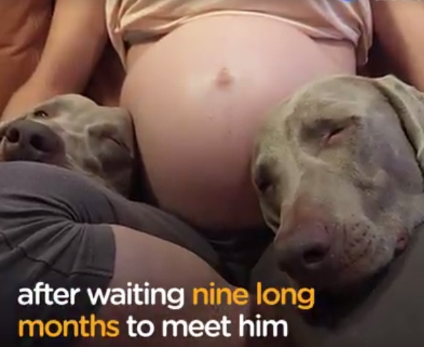 Dogs Wait 9 Long Months To Meet Their New Baby Brother – Now That He's Here They're Melting Hearts Everywhere