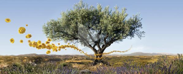 L'occitane en Provence - linija badem