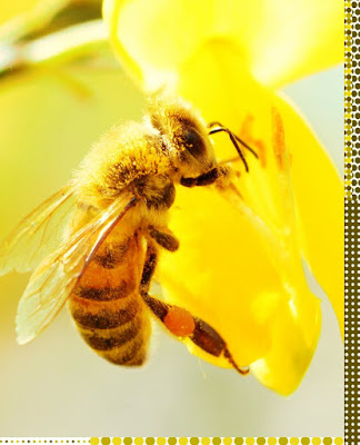 Most bees gather only pollen or nectar.