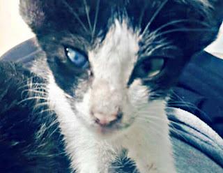 Mata Kucing Tertutup Selaput Putih