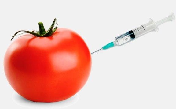 ubat kencing manis terbaik tomato