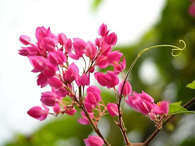 hình ảnh hoa đẹp nhất thế giới 9