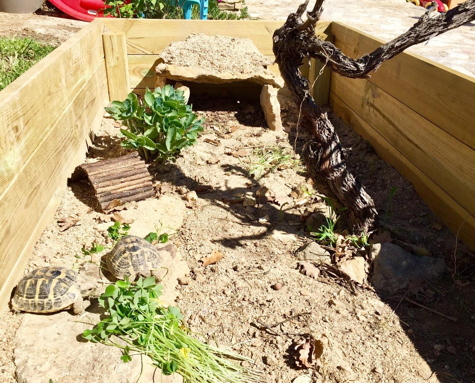 enclos a tortues