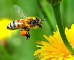 bunga dan lebah.jpg