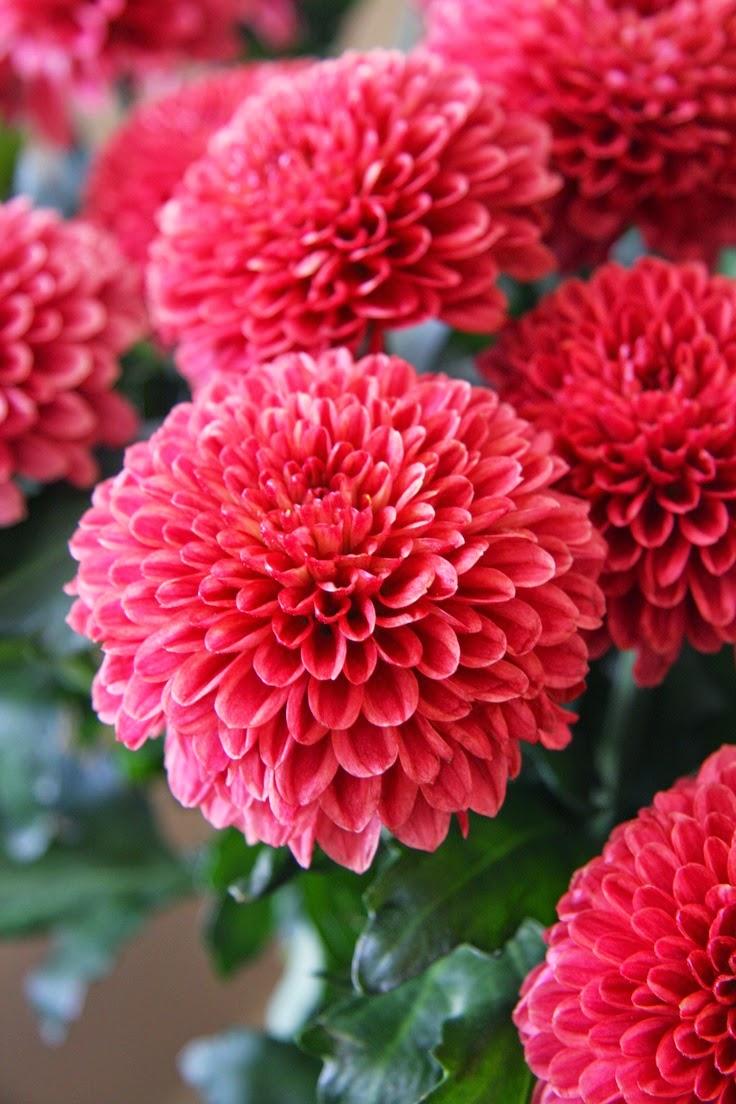 Inspiration florale berenice big - Plante porte malheur ...