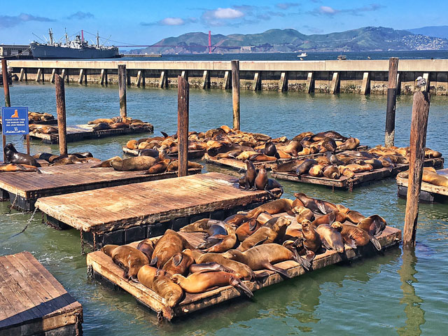 Sea Lions at Fishermans Warf - San Francisco, CA