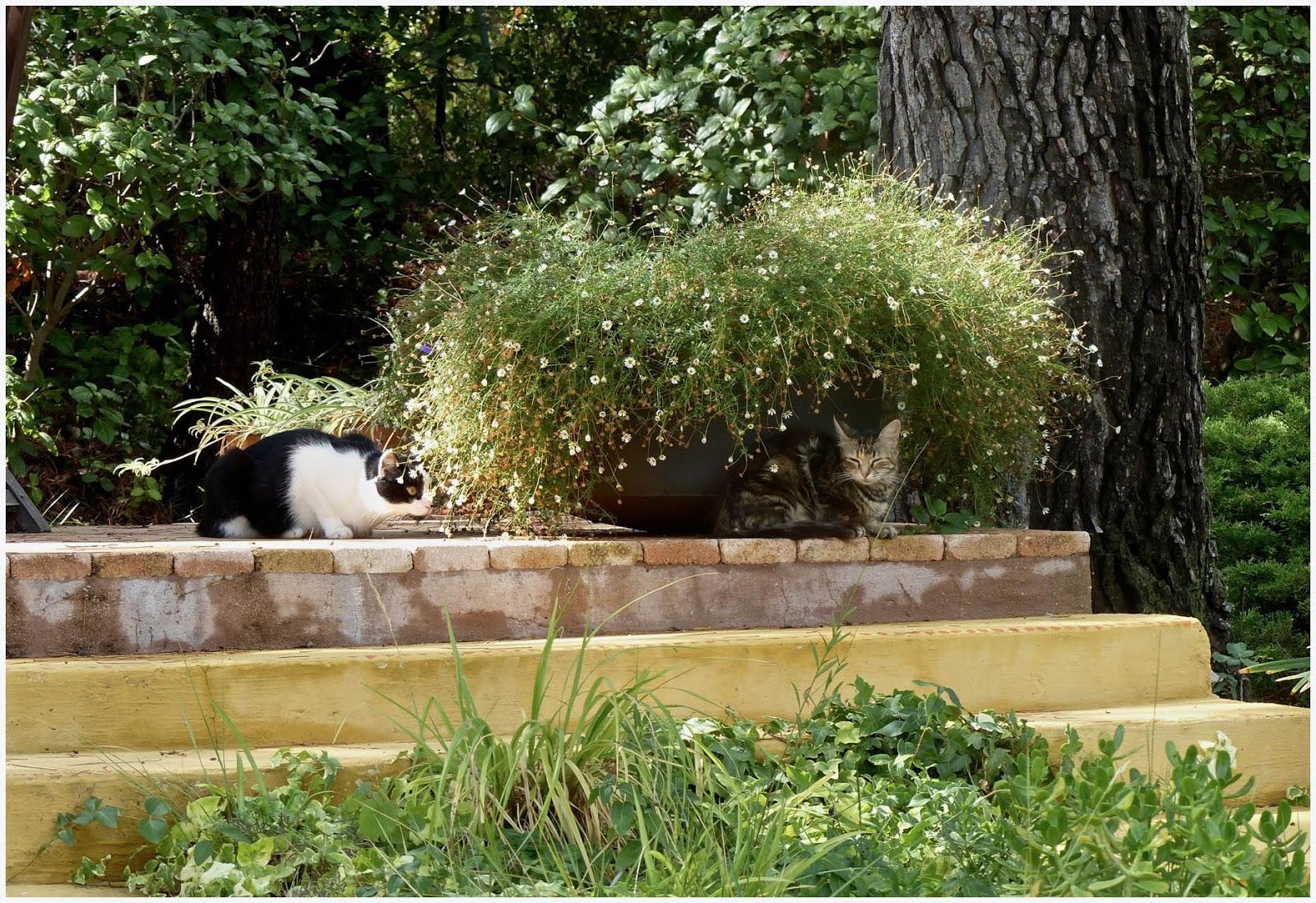 curieux jardin chacun cherche son chat. Black Bedroom Furniture Sets. Home Design Ideas