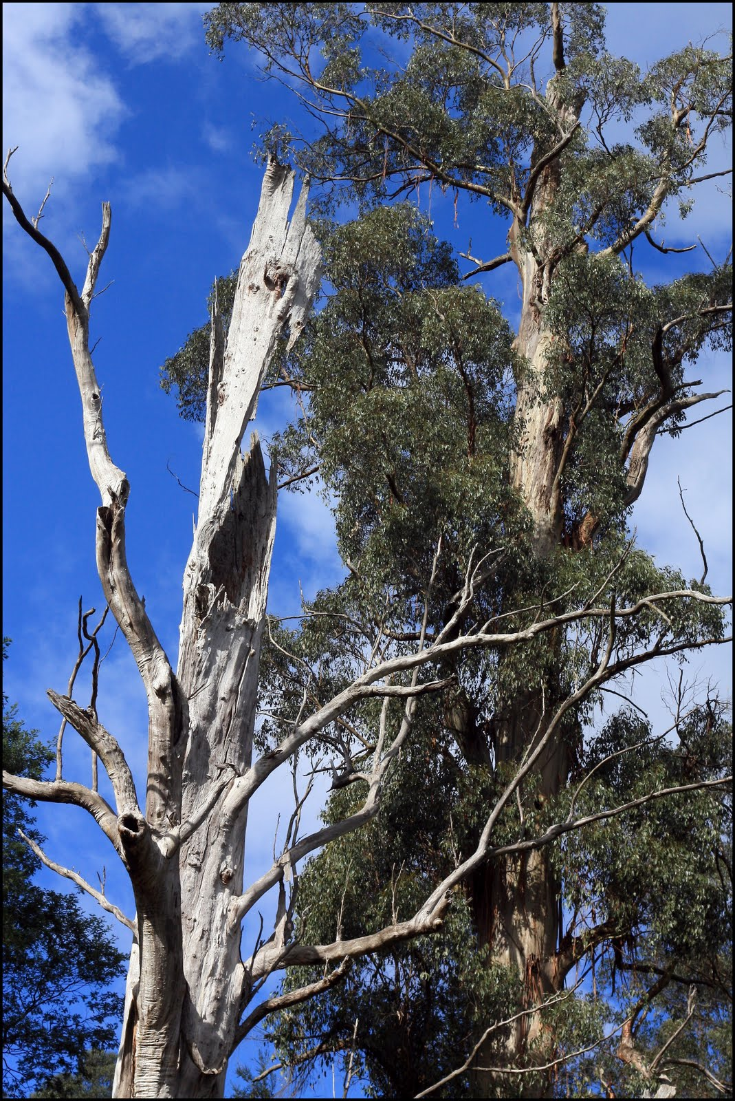 Hollow-bearing trees