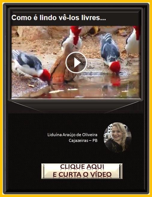 http://claudiomar-videos.blogspot.com/2015/01/como-e-lindo-ve-los-livres.html