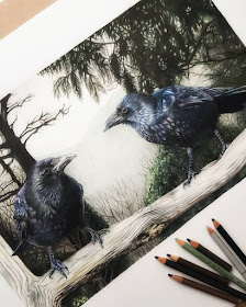 04-Ravens-Tom-Strutton-Animal-Drawings-www-designstack-co