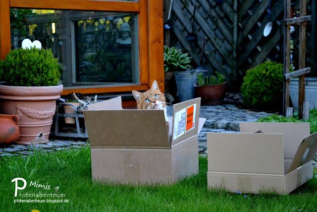 Katze Mimi sitzt voller Freude in einem Karton