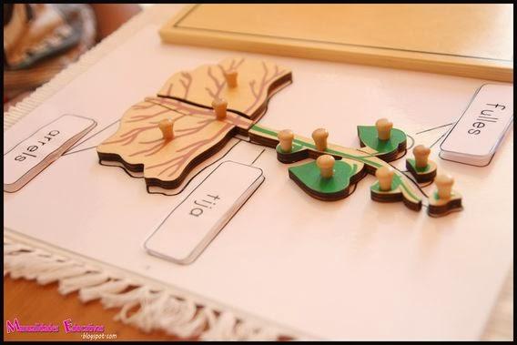 Bot nica montessori puzzle las partes de la planta for Como crecen los arboles para ninos