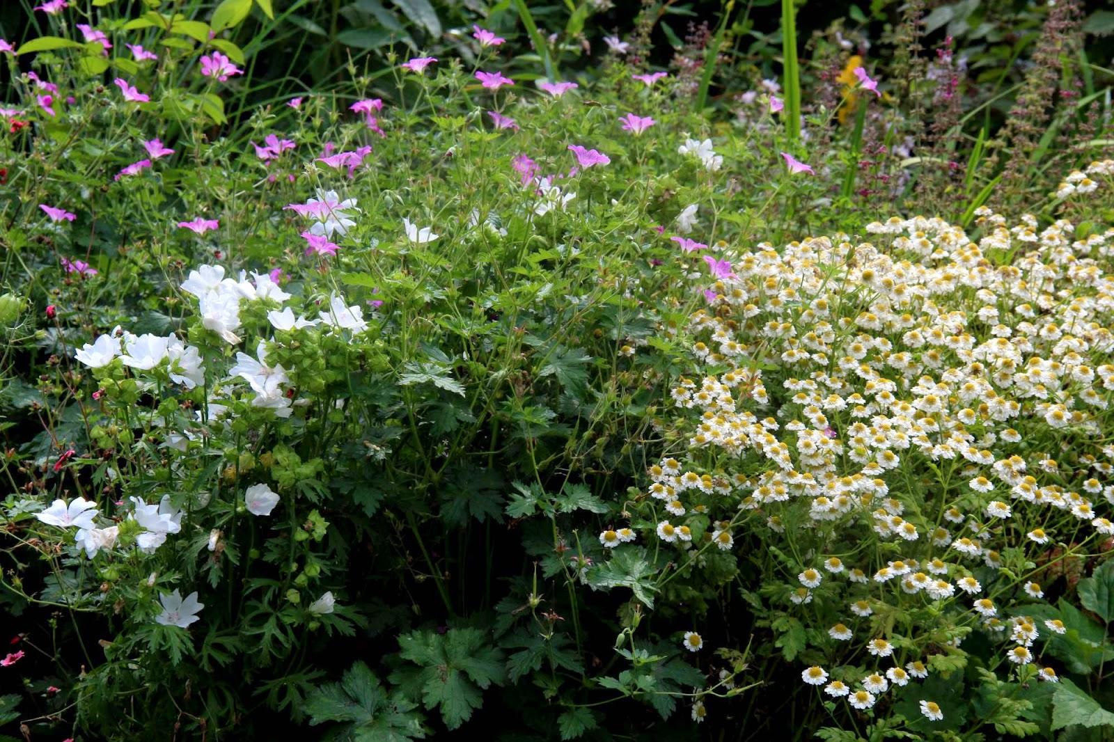 Je suis au jardin dans le beau jardin de fabienne - Beau jardin rose and geranium ...