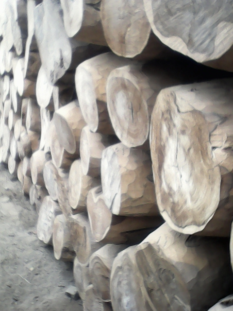 Wood For Sale In Pakistan