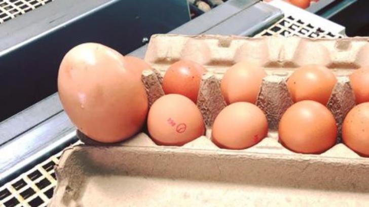 Telur yang ukurannya tiga besar lebih besar dari telur biasa