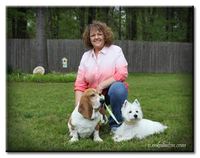 Bentley Basset Hound, Pierre Westie and I are family