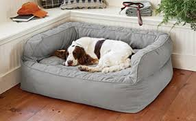 Purchasing Large Dog Beds For That Extra Special Care