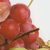 Kelemahan Pengembangan Anggur di Dataran Tinggi dan Penaganannya