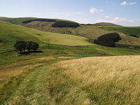 Northumbrian Images Blogspot,Cheviot Hills,Northumberland,Countryside, Wooler, Trees,Northumbrian Images, Northumberland National Park,North East, England,Photos,Photographs