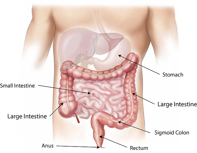 Diseases in the stomach | Definition & Facts for Viral Gastroenteritis (gastroenteritis)