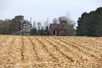 harvested corn field