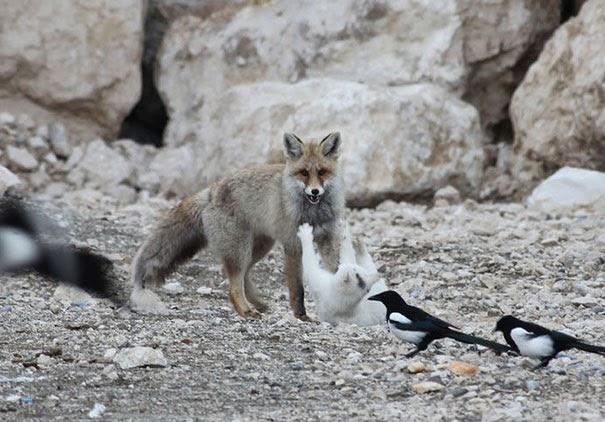 Inusual amistad entre animales de diferentes especies