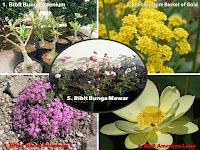 Daftar Bibit Bunga Hias Jadi Peluang Bisnis Menjanjikan, Tertarik Mencobanya?