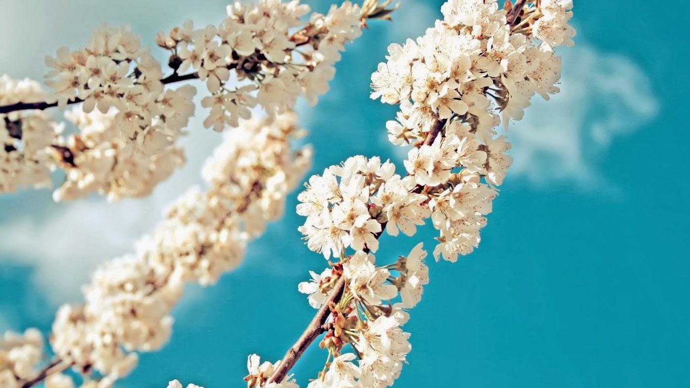 Hình nền Mùa Xuân tuyệt đẹp. Full HD