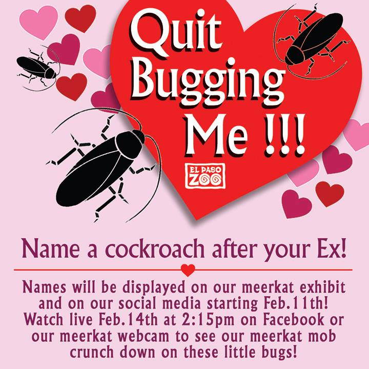Zoo Named Cockroaches After People's Exes And Fed Them To Meerkats On Valentine's Day