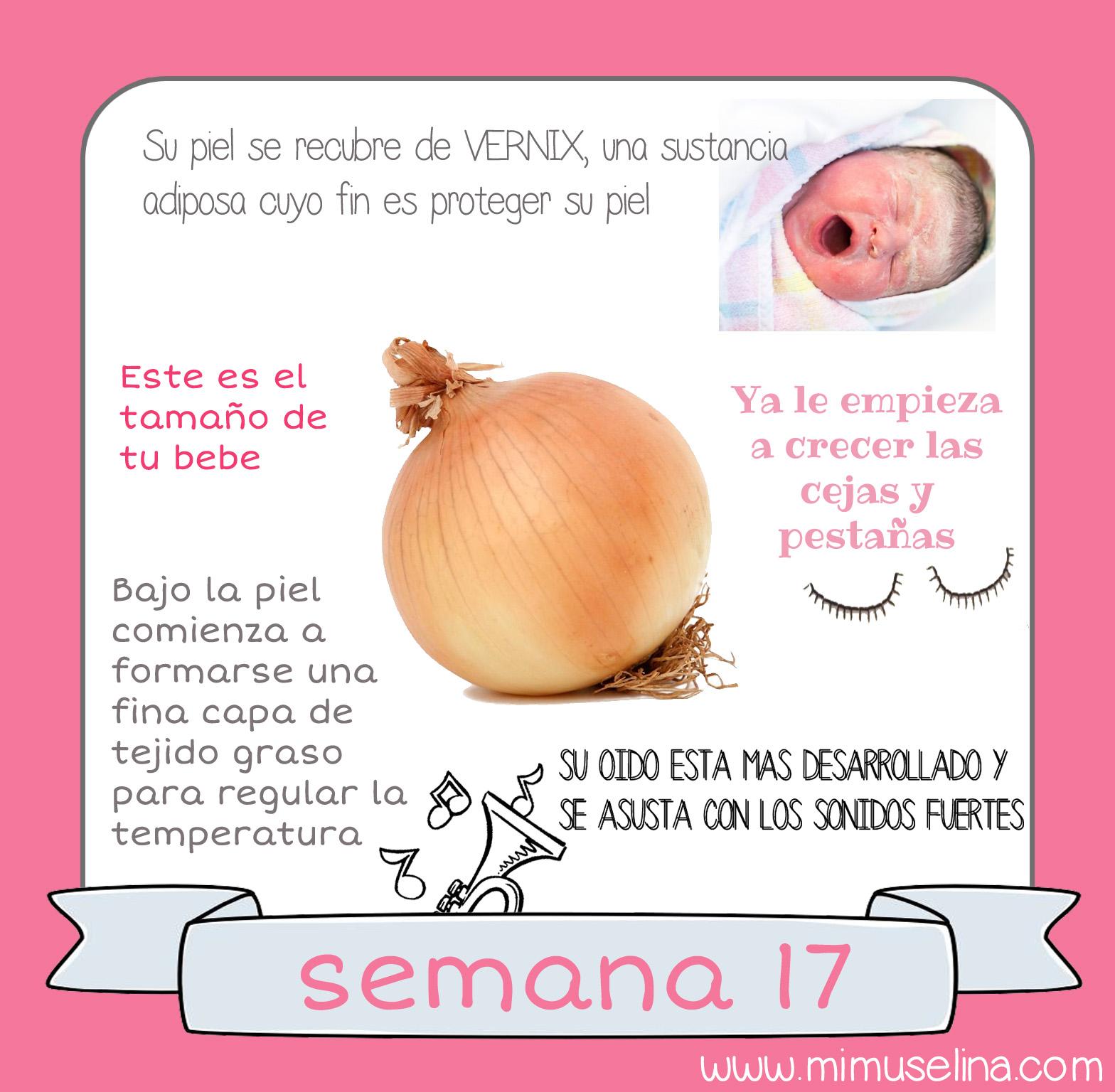 448628925 BebeBlog by mimuselina  Semana 17 embarazo. Tamaño y evolución del ...