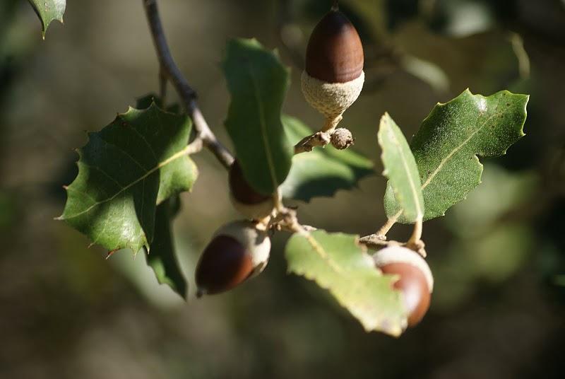 Jerez de los rboles 229 la dignidad de los arboles ii for Porque hay arboles de hoja perenne