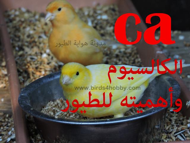 الكالسيوم ( Calcium ) مصادره وأهميته للطيور