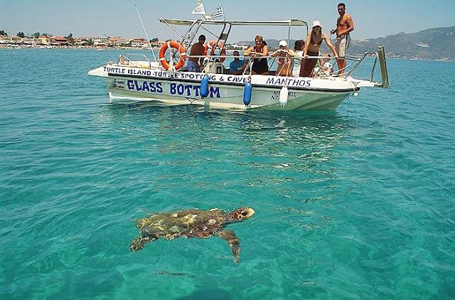 Tartarugas em Zaquintos