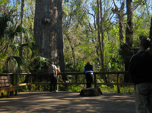 Big Tree Park em Orlando