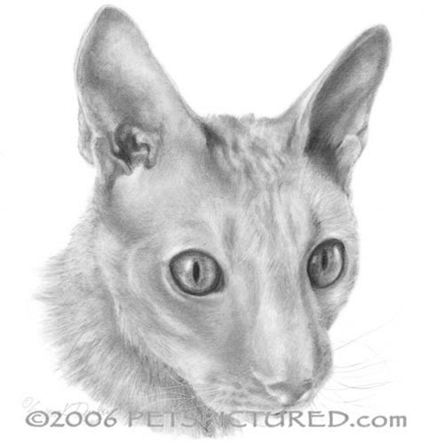 03-Cornish-Rex-Susan-Donley-Cats-and-Dogs-Featured-in-Pencil-Portraits-www-designstack-co
