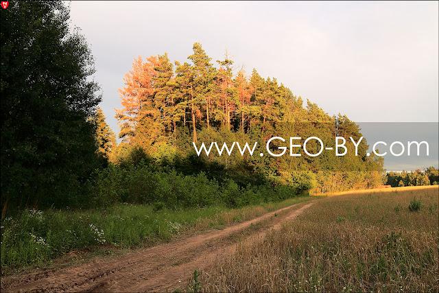 Лес в Беларуси на закате