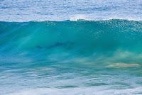 31 Great White Shark sighting j bay open foto WSL Kelly Cestari