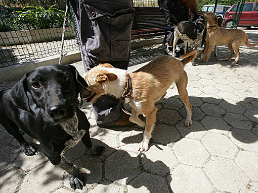 Lagos reforça apoios para a proteção de animais
